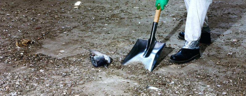 padlásokon galambürülék takarítás, fertőtlenítés